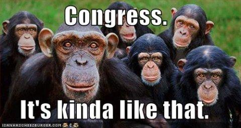 monkeys-sm