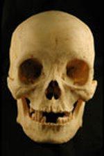 skull1095a_m