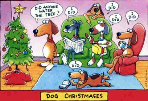 dog-christmas1