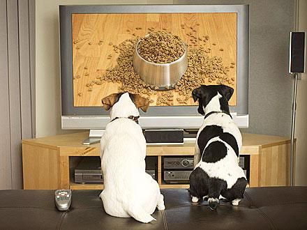 dog-tv-440