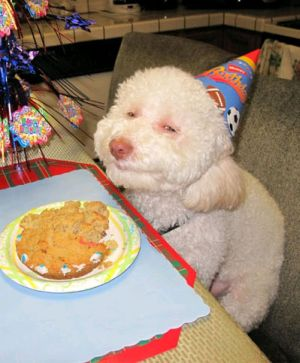 party-dog