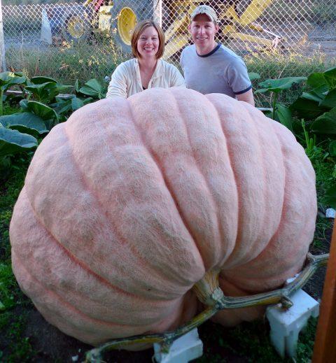 GiantPumpkin-s