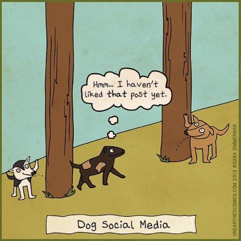 dog-social-media-s