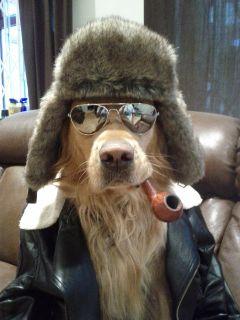 dog2014-s