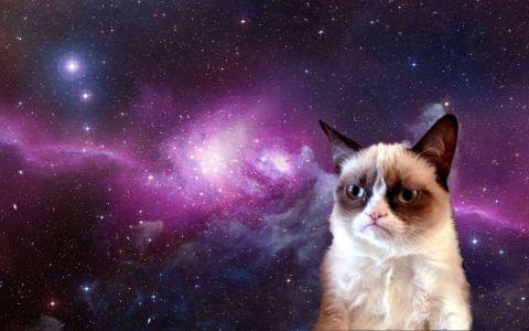 grumpy-cat-in-space-s