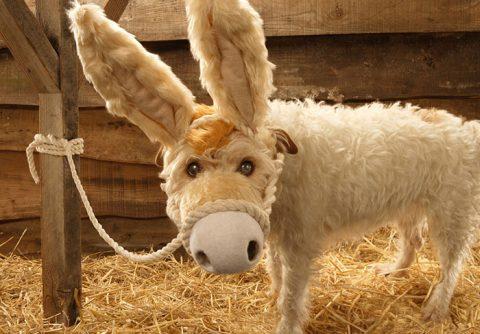 donkeydog-s