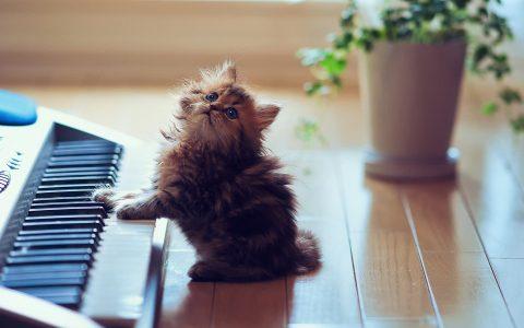 cat_music_s