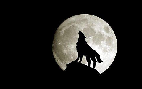 Wolf-Moon-s