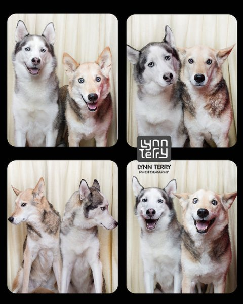 doggyphotobooth-s