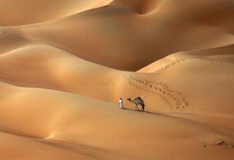 camel-s